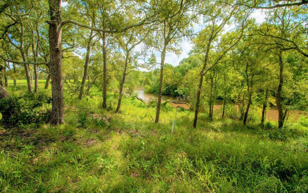 237 River Tree Drive